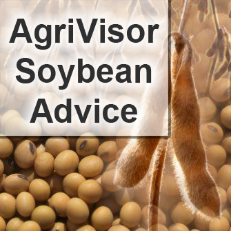 Soybean Advice