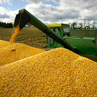 filling corn wagon