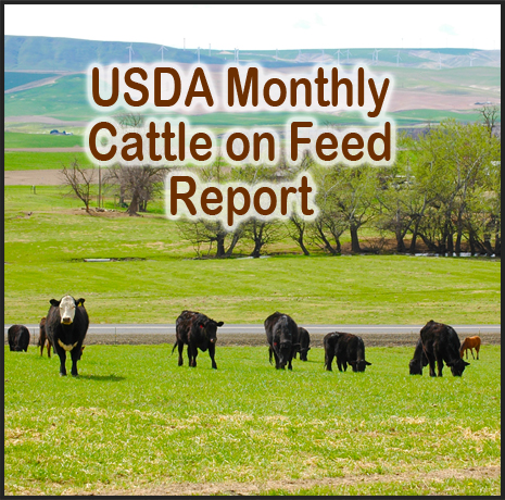 cattle on feed graphic