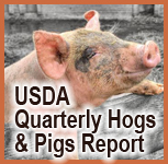 hogs and pigs report