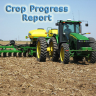 crop progress report