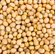 close up of soybeans